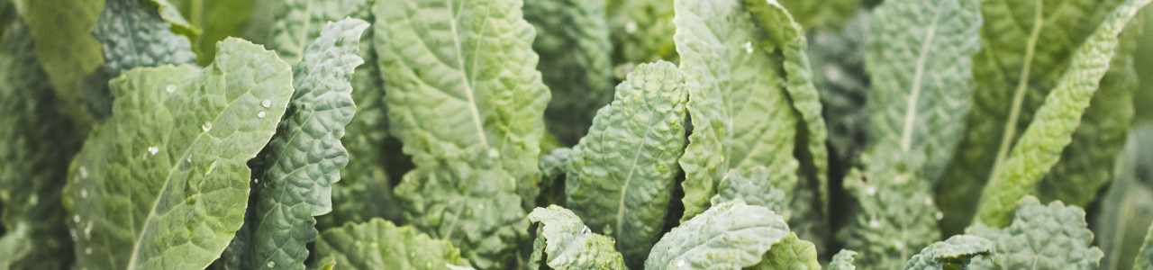 brassica-leafy-green-seeds-banner-category.jpg