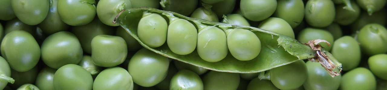 pea-bean-seeds-banner-category.jpg