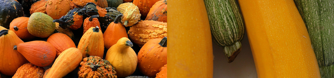 pumpkin-squash-courgette-seeds-banner-category.jpg