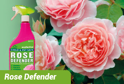 Natural Rose Defender