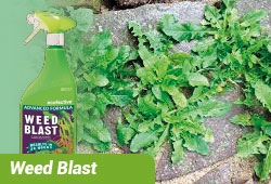 Weed Blast