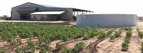 Pioneer Model XL50, 65,000 Gallon Water Storage Tank on farm.