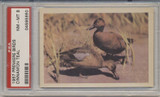 1957 PREMIERE BIRDS..CINNAMON TEAL  PSA 8 NM-MT  #*