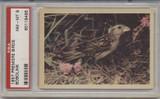 1957 PREMIERE BIRDS..BOBOLINK  PSA 8 NM-MT  #*