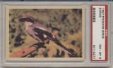1957 PREMIERE BIRDS..SHRIKE  PSA 8 NM-MT  #*