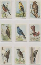 1915 AH2320 Useful Birds Of America Series 5 Set 15  #*