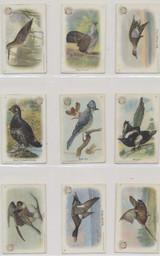 1918 Useful Birds Of America New Series Of Birds Set 30 Low Grade  #*