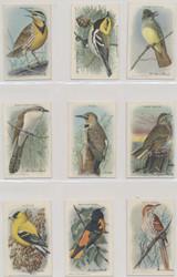 1938 J9-5 USEFUL BIRDS OF AMERICA SERIES 10 SET 15  Mid Grade Set  #*