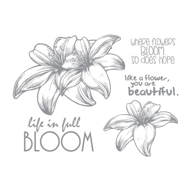 Full Bloom Stamp Set