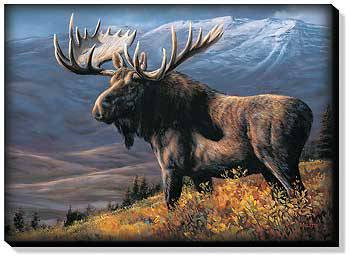 Bull Moose Wrapped Canvas Art