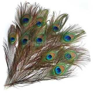 Peacock Feathers, set of 12