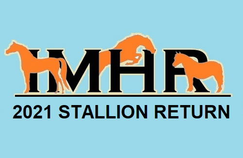 IMHR Stallion Return (2021)
