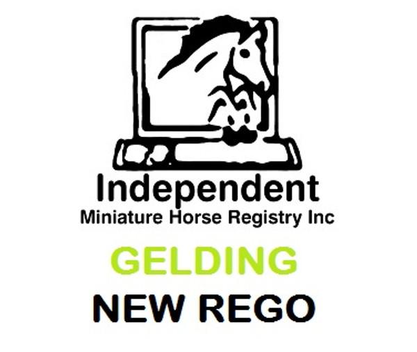 Registration Gelding (Any Age)