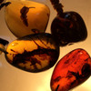 Reshooting the Burmese Amber (Burmite) we just acquired in country.  Lots of inclusions of what looks like fossilized plant matter. Backlighted to show the worlds inside.  I will post each piece individually at ShopMabuhay. Com