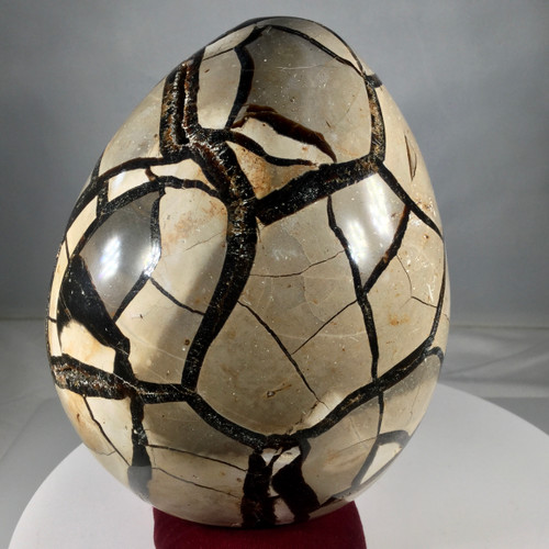 Septarian Dragon Egg, 1750 grams