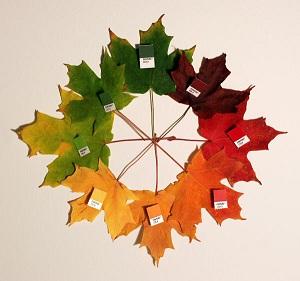 Maple Leaf Author Chris Class.jpg