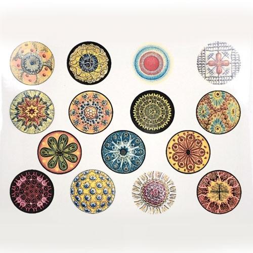 Diatoms - Full Color