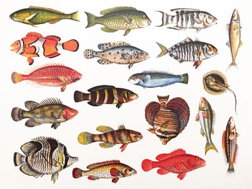 Fish 2 - Full Color