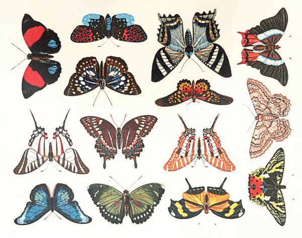 Butterflies 2 - Full Color