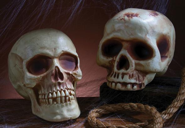 Assorted Skull Head Prop