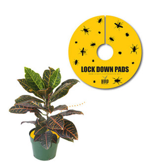 Lock Down Pads 12'' (5pcs)