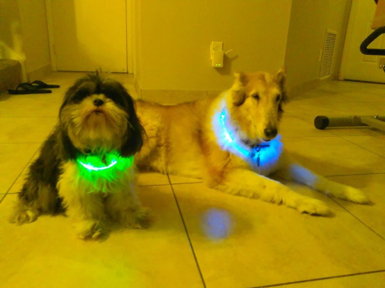 LED, Custom,Print,Wristband,Dog,Collar,engraved,light up, collar,dog