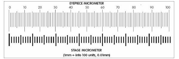 Eyepiece Stage Micrometer