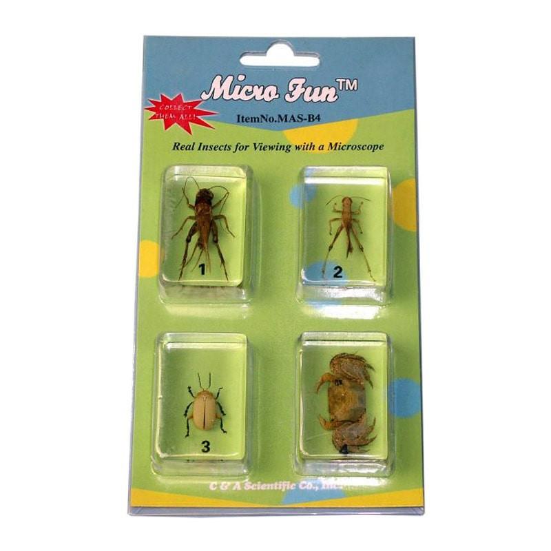Micro Fun B4 Bug Blocks Specimens