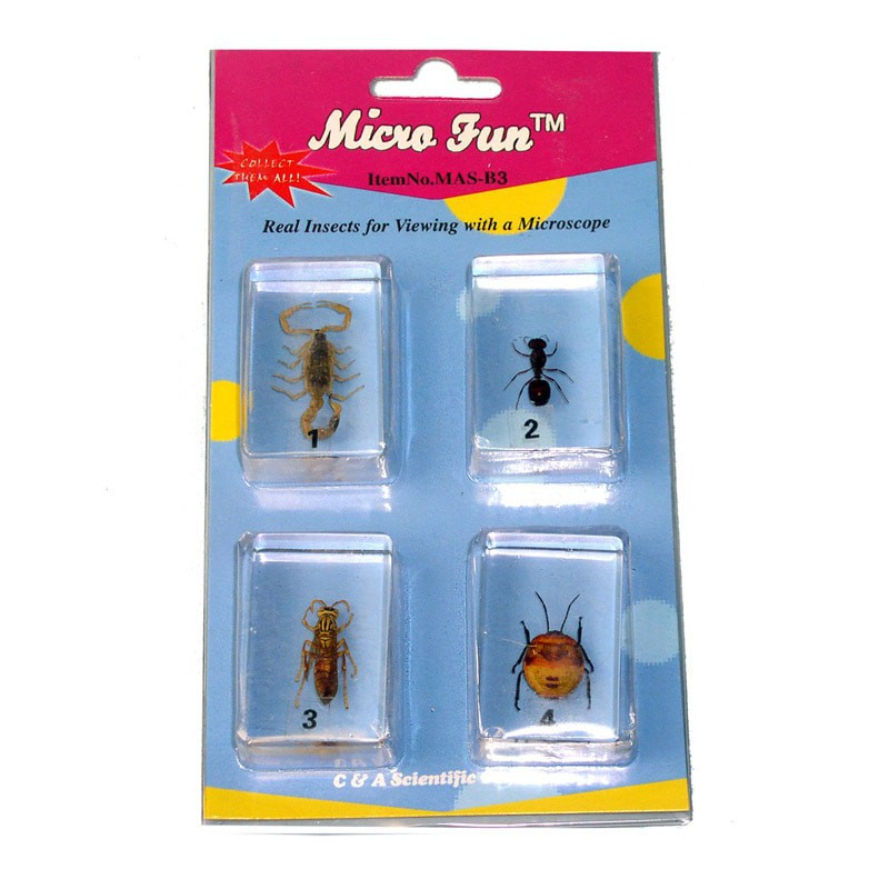 Micro Fun B3 Bug Blocks Specimens