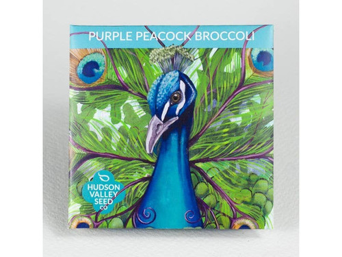 Purple Peacock Broccoli