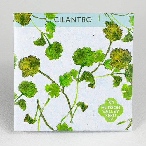 Cilantro Herb Seeds