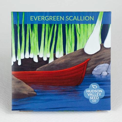 Evergreen Scallion Seeds