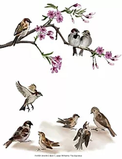 Sparrows Towel