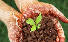 henna-plant-and-henna-tattoo-icon.jpg