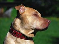 Custom Leather Dog Collars Guide