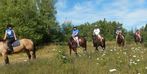 Horseback Riding - Horse Riding