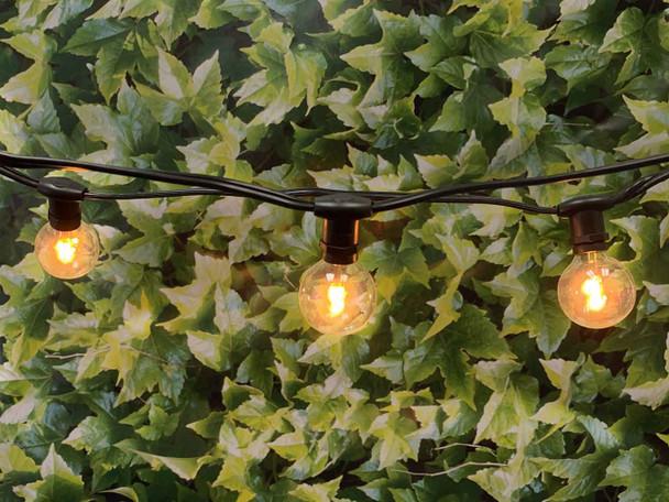 25' Black C7 Commercial String Light & LED G40 Premium Bulbs