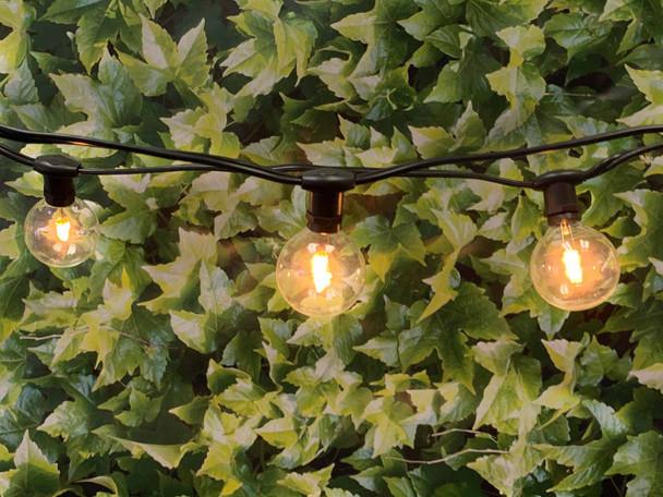 25' Black C7 Commercial String Light & LED G50 Premium Bulbs