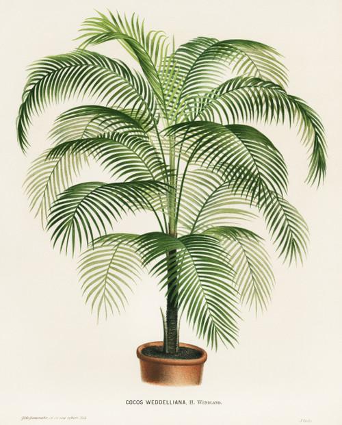 Palm Plant Digital Art Download