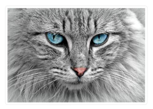 Beautiful Grey Cat Vinyl Sticker