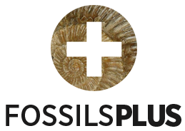 FossilsPlus.com - Quality Fossils for Collectors
