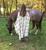 Throw In2Green Luxury Recycled Blanket Equestrian Pattern in Hemp/Black/*
