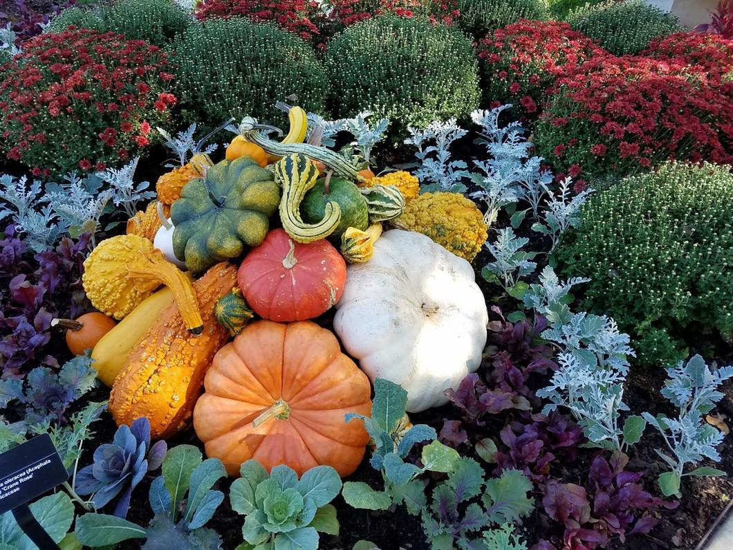 Love Pumpkinland!