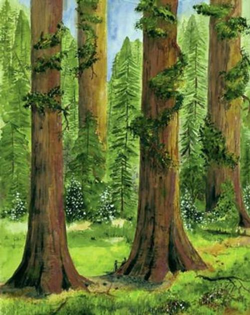 Giant Sequoias, Yosemite