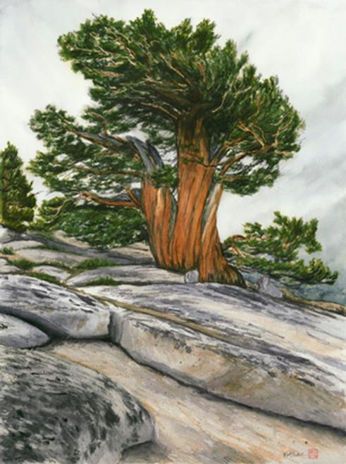 Juniper Pine on Omstead Point, Yosemite