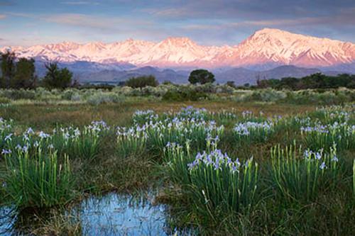 Bishop Spring Sunrise Photo