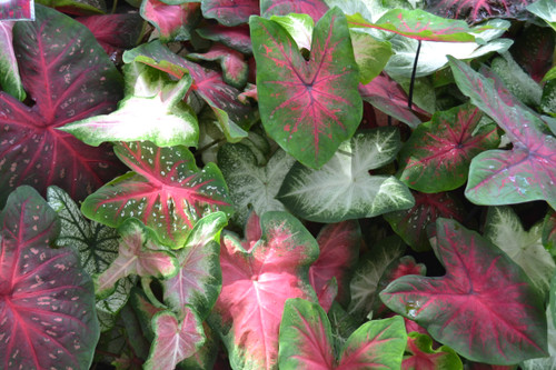 Our mixes include  several varieties in three colors