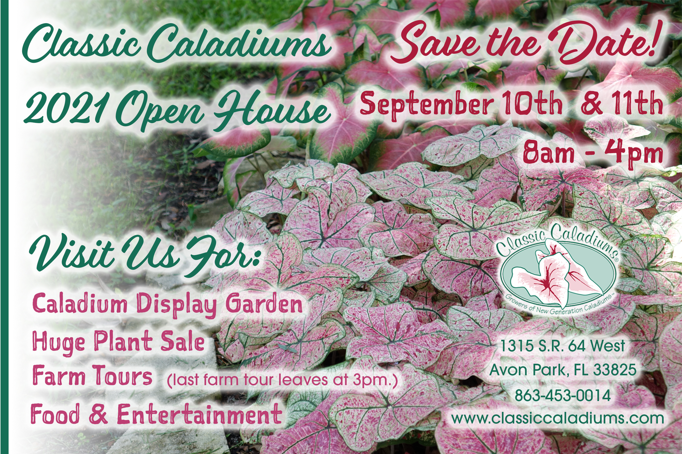 Classic Caladiums Annual Open House & Tours