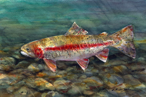 """""""DESCHUTES RAINBOW"""" limited edition signed and numbered rainbow trout fish print from an original watercolor painting by Dean Crouser. Edition limited to 400 prints."""