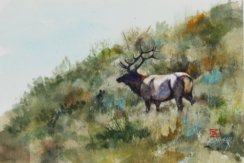 """""""ELK on SIDEHILL, Sketch"""" original watercolor painting by Dean Crouser. This is a preliminary smaller sketch for a painting that I will do down the road. This original painting measures approximately 8-1/2"""" wide by 6"""" tall. here's a great opportunity to own a DC original! Artist retains any and all rights to future use of this image."""